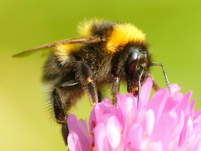 5 enkla saker du kan göra för att hjälpa våra bin 1