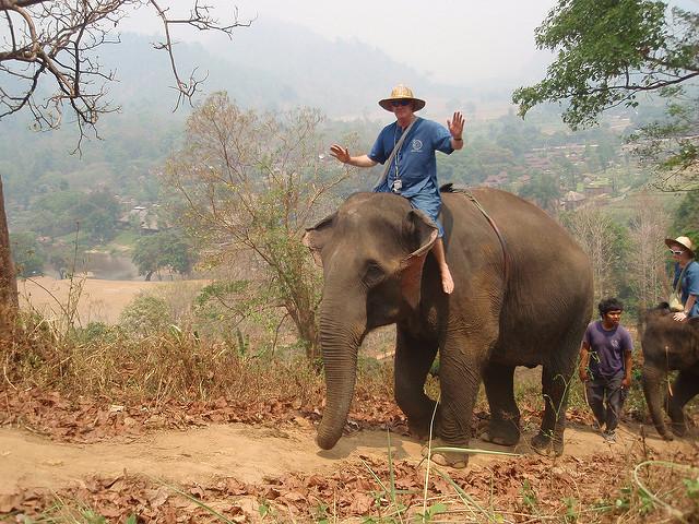 Lonely Planet avråder all form av elefantridning 1